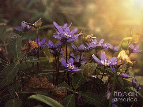 Blessed light by Monika Pachecka