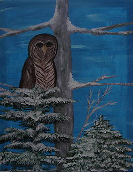 Blessing of the Barred Owl by Angie Butler