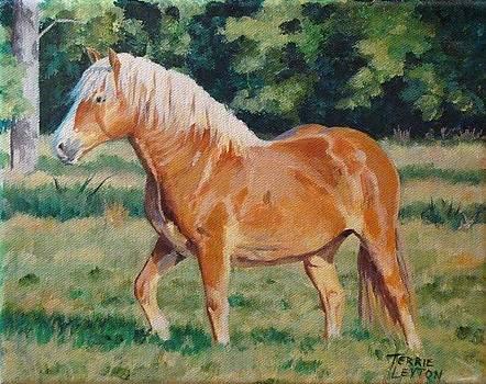 Blondie by Terrie Leyton
