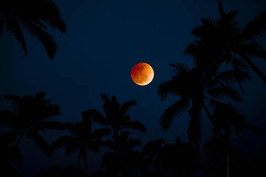 Blood Moon In The Tropics by Sean Davey