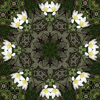Valerie Kirkwood - Bloodroot Kaleidoscope
