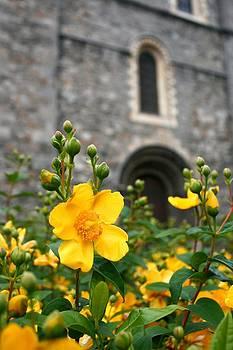 Bloom at Christ Church Cathedral by Veronica Vandenburg