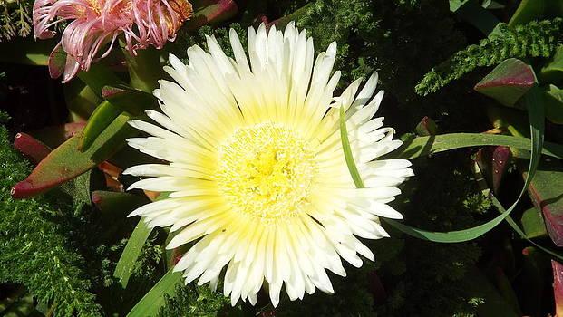 Bloom by Brett Chambers