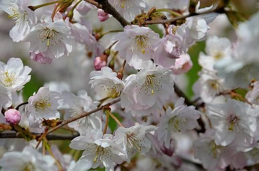 Gynt   - Bloom