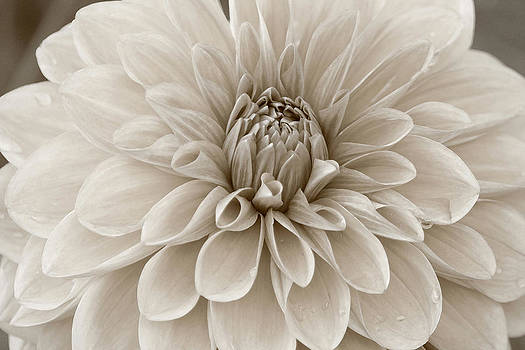 Bloom by Matthew Ahola