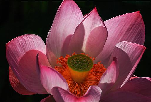 Bloom by Robert Pilkington