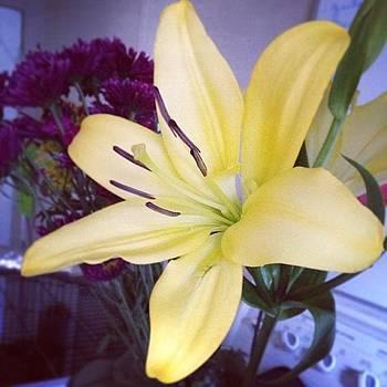 #bloom by Sarah Johanson