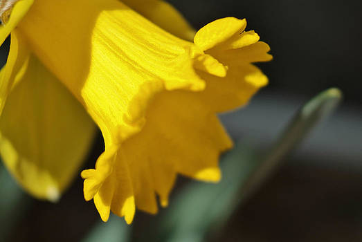 Bloom by Thomas  MacPherson Jr