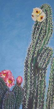 Marcia Weller-Wenbert - Bloomin Cactus