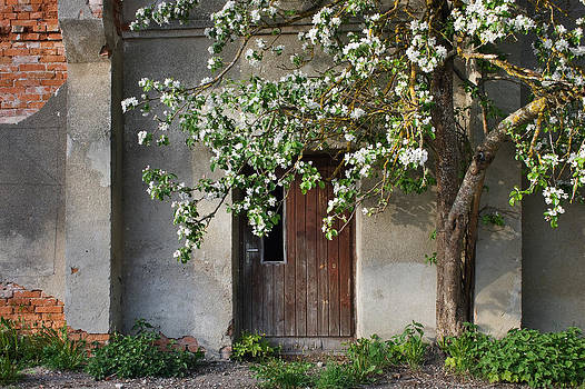 Blooming apple and old house by Anna Grigorjeva