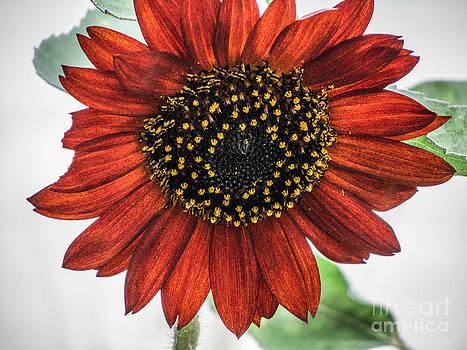 Jaclyn Hughes Fine Art - Blooming Burst