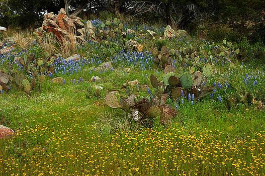 Robert Anschutz - Blooming Hillside