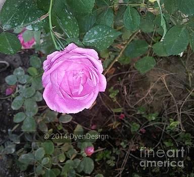 Blooming Rose by Dye n  Design