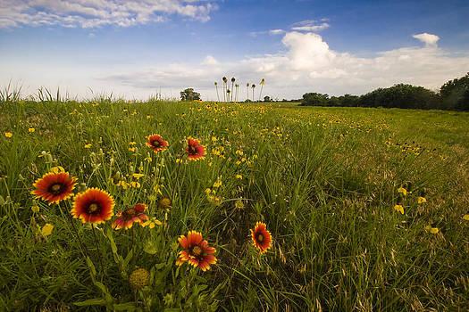 Scott Bean - Blooming