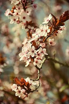Gynt Art - Blooming Spring
