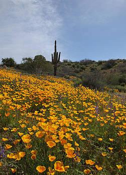 Susan Rovira - Blooms among the Tall Cactus
