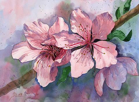 Blooms by Reza Daliloltejari