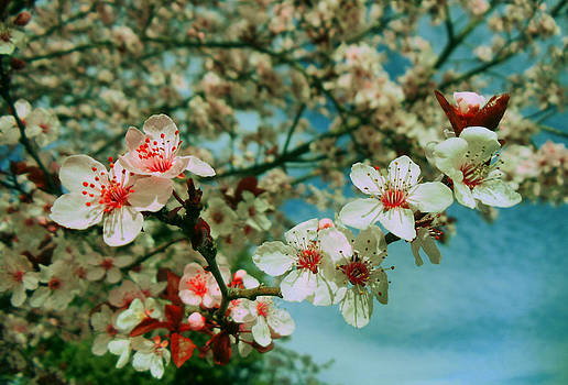 Blossom by Adda Barrios