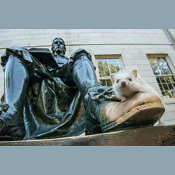 Blossom And John Harvard Welcome The by Derek Kouyoumjian