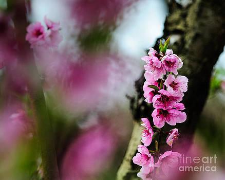 Terry Garvin - Blossom Blur