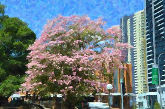 Phillip J Gordon - Blossom In Brisbane