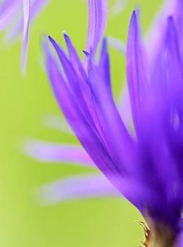 Blossom Macro by Kim Thompson