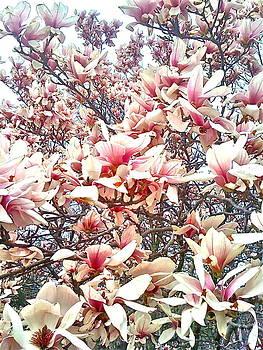 Blossom Pattern by Kimberly Nickoson