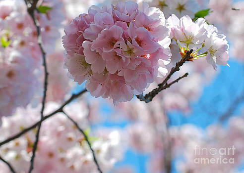 Blossom by Robin Hassler