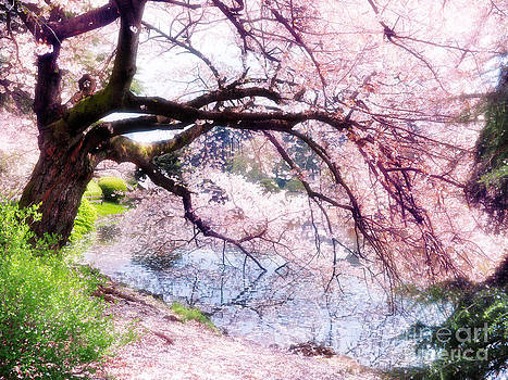 Blossoming cherry tree touching water by Oleksiy Maksymenko