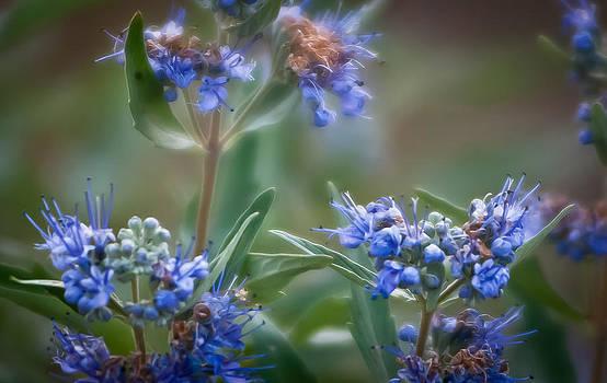 Blossoms in Blue by Helene Kobelnyk