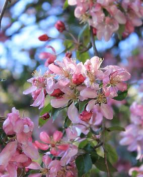 Blossoms by Melissa Krauss