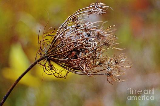 Blowing in the Wind by Brigitte Emme