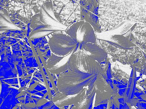 Blue Amaryllis by Regina McLeroy