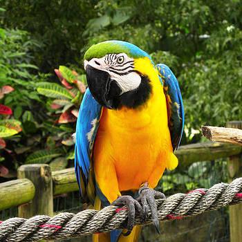 Blue and Gold Macaw Parrot by BluedarkArt Lem