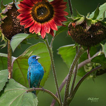 Blue and green by Don Anderson