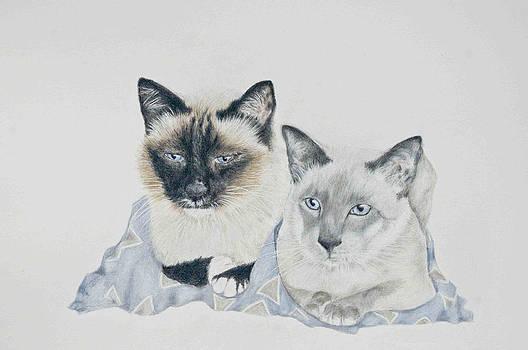 Blue and Honey Bear by Marla Saville