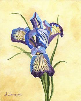 Blue and Purple Iris by Sara Davenport