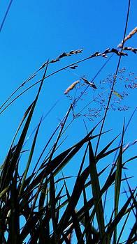 Blue Backdrop by Pierre Labrosse