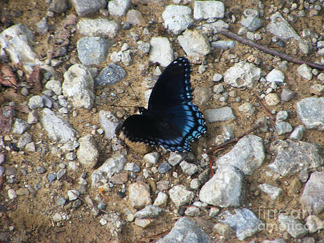 Blue Beauty by Melissa Lightner