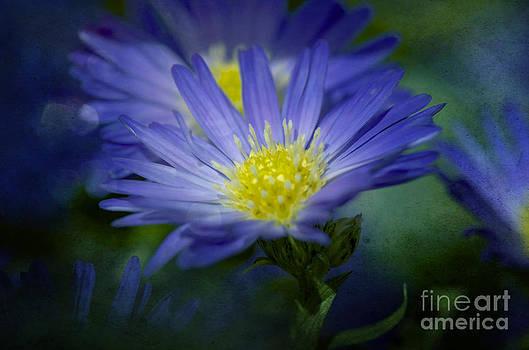Blue Beauty by Nicole Markmann Nelson