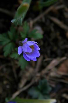 Blue Beauty by Paula Tohline Calhoun