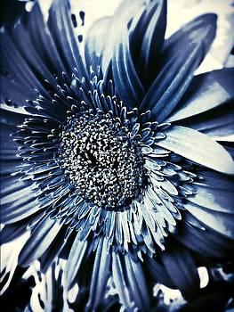 Blue Belle by Natalya Karavay