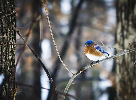 Blue Bird by Heather Grow
