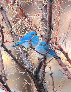 Blue Birds by Floyd Tillery