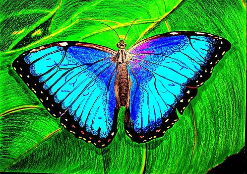Blue Butterfly by Michael Runner