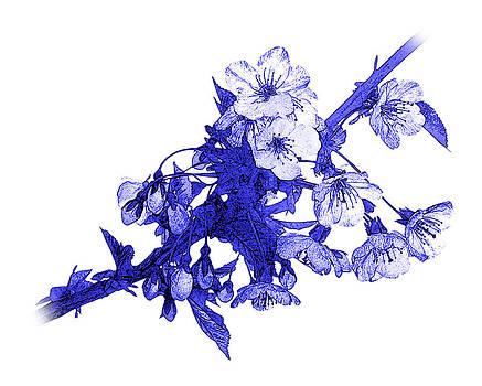 Jane McIlroy - Blue Cherry