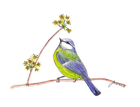 Blue Chickadee by Jana Bodin