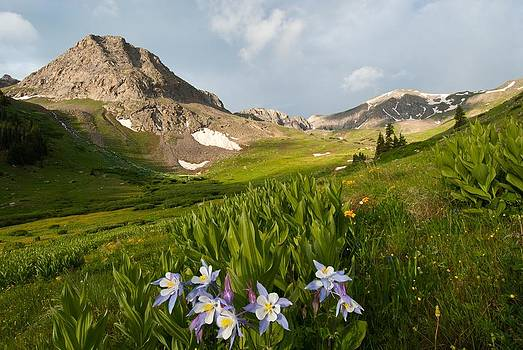 Handie's Peak and Blue Columbine on a Summer Morning by Cascade Colors