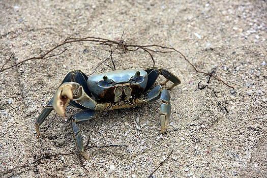 Sophie Vigneault - Blue Crab