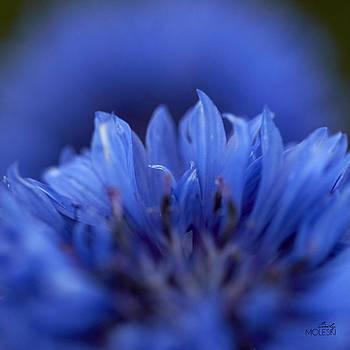 Blue Day I by Cindy Moleski